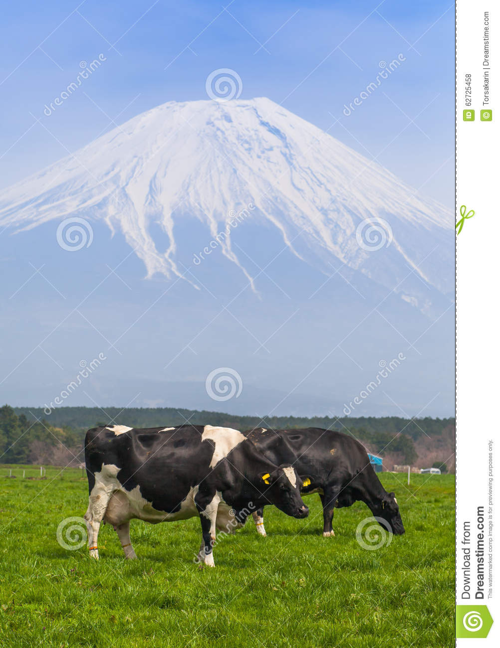 Download Dairy Farm With Mountain Fuji In Background Stock Photo