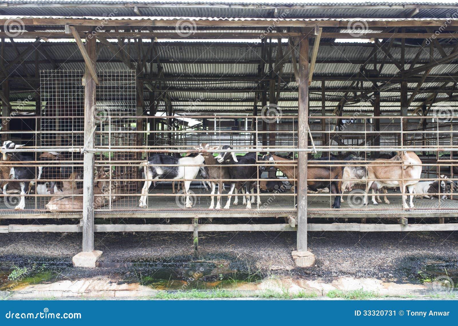 Sample dairy farm business plan