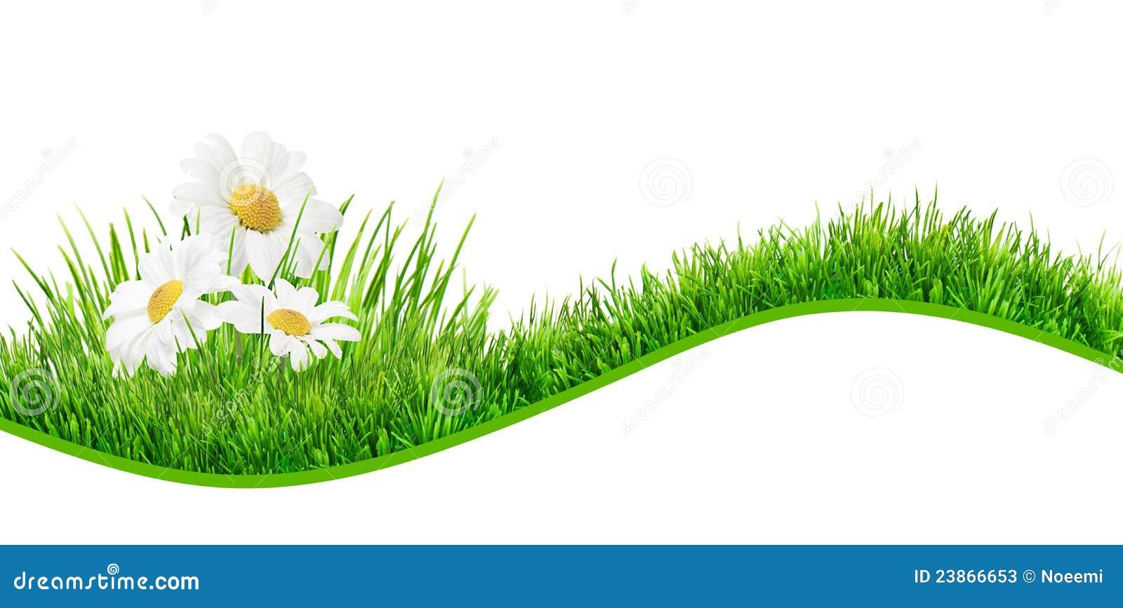 Daisies Banner Illustration 23866653 Megapixl