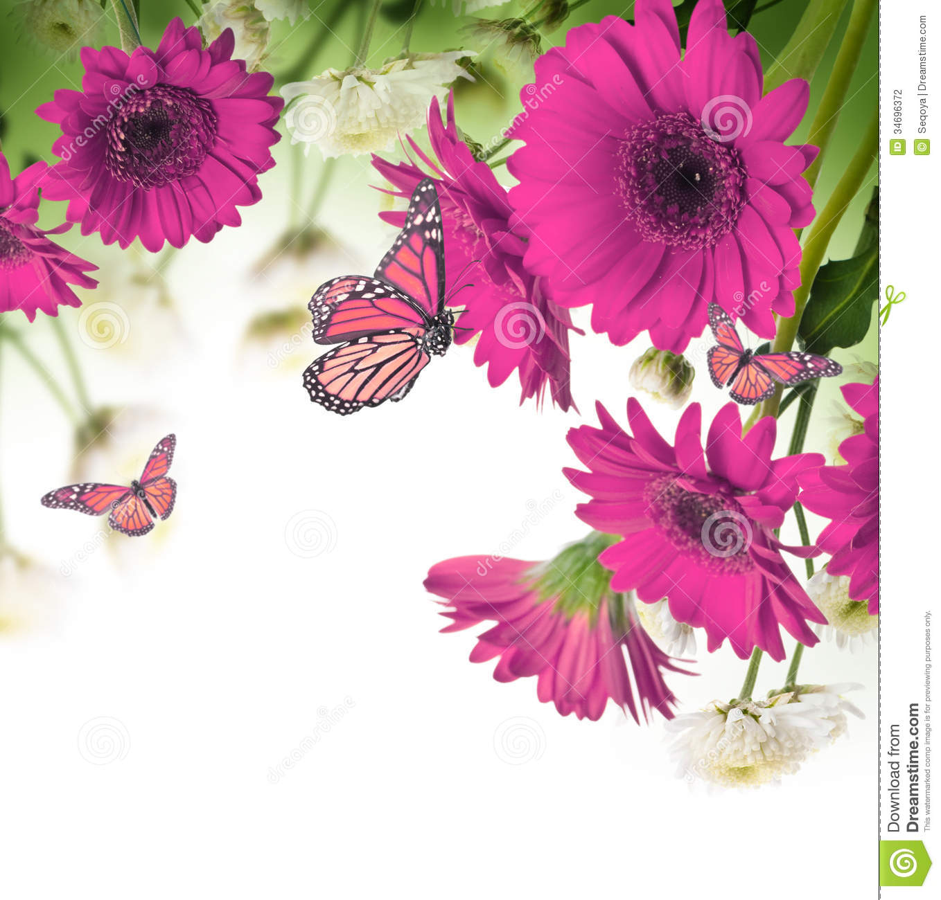 Daisies And Butterfly On A White Background Stock Photo