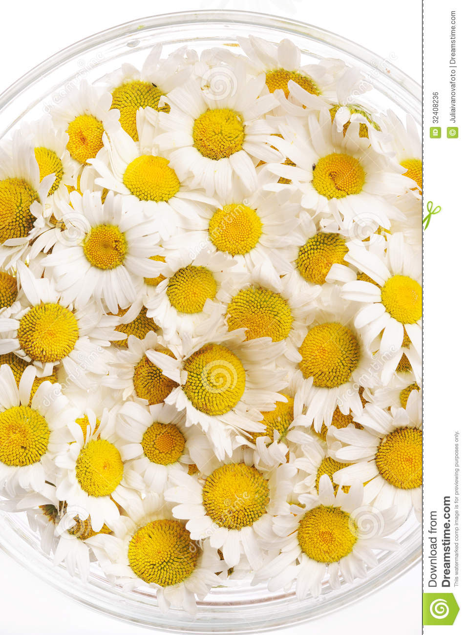 Daisies in a glass vase stock photo. Image of flowers ...