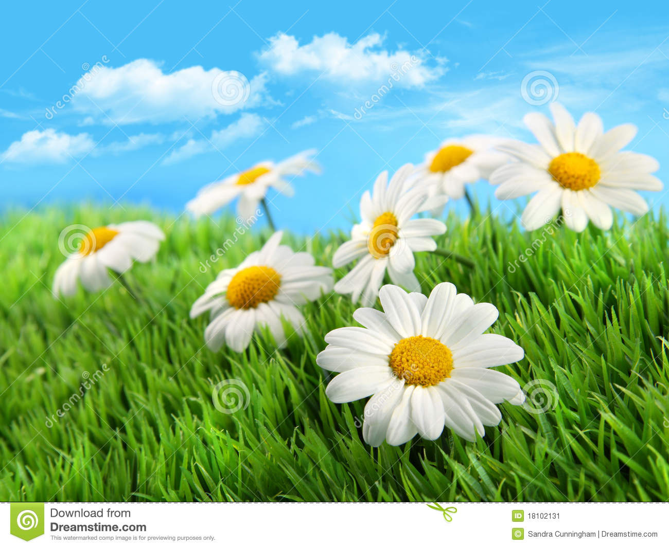 Daisies In Grass Against A Blue Sky Stock Image Image