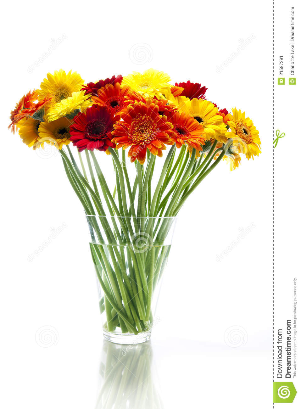 Daisies in vase stock image image of floral bouquet 21587391 daisies in vase reviewsmspy
