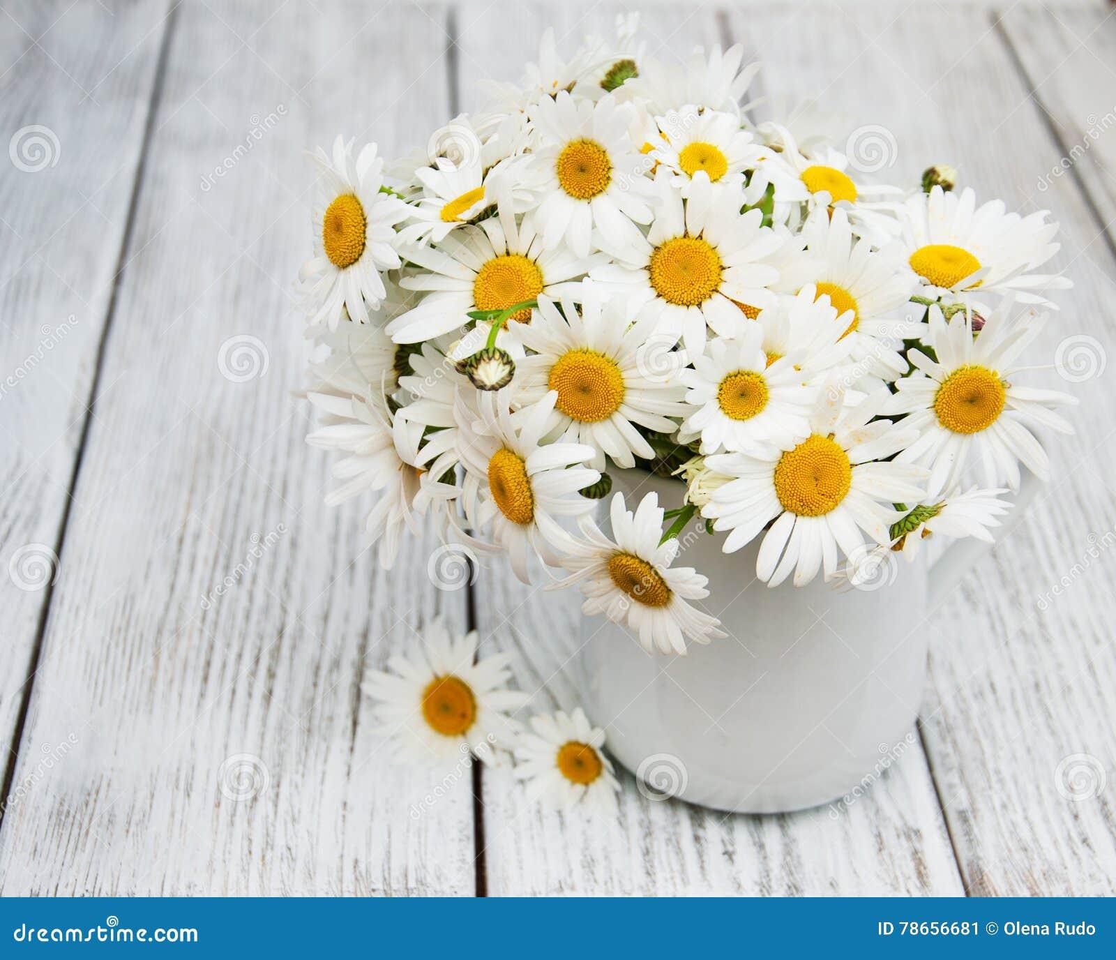 Daisies in vase stock image image of flora beauty bloom 78656681 daisies in vase reviewsmspy
