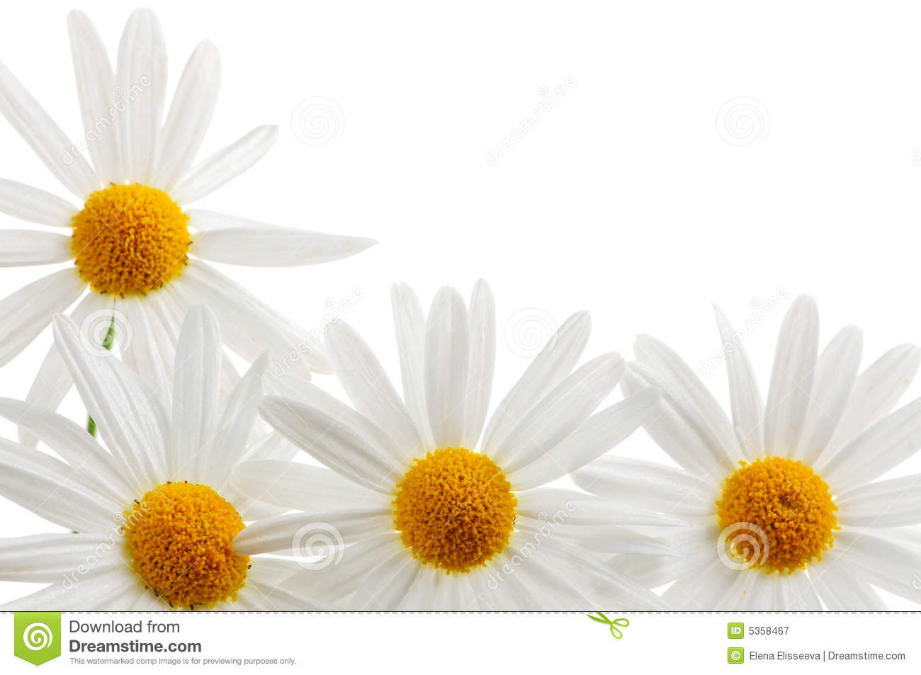Daisies On White Background Royalty Free Stock Photography ...