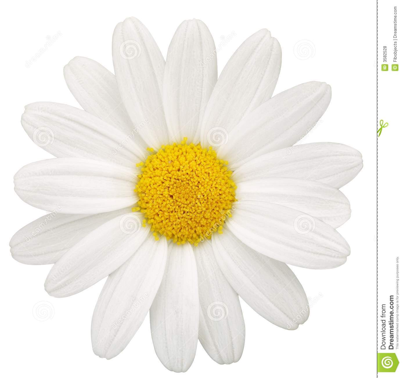 Daisy Royalty Free Stock Photos - Image: 3582528