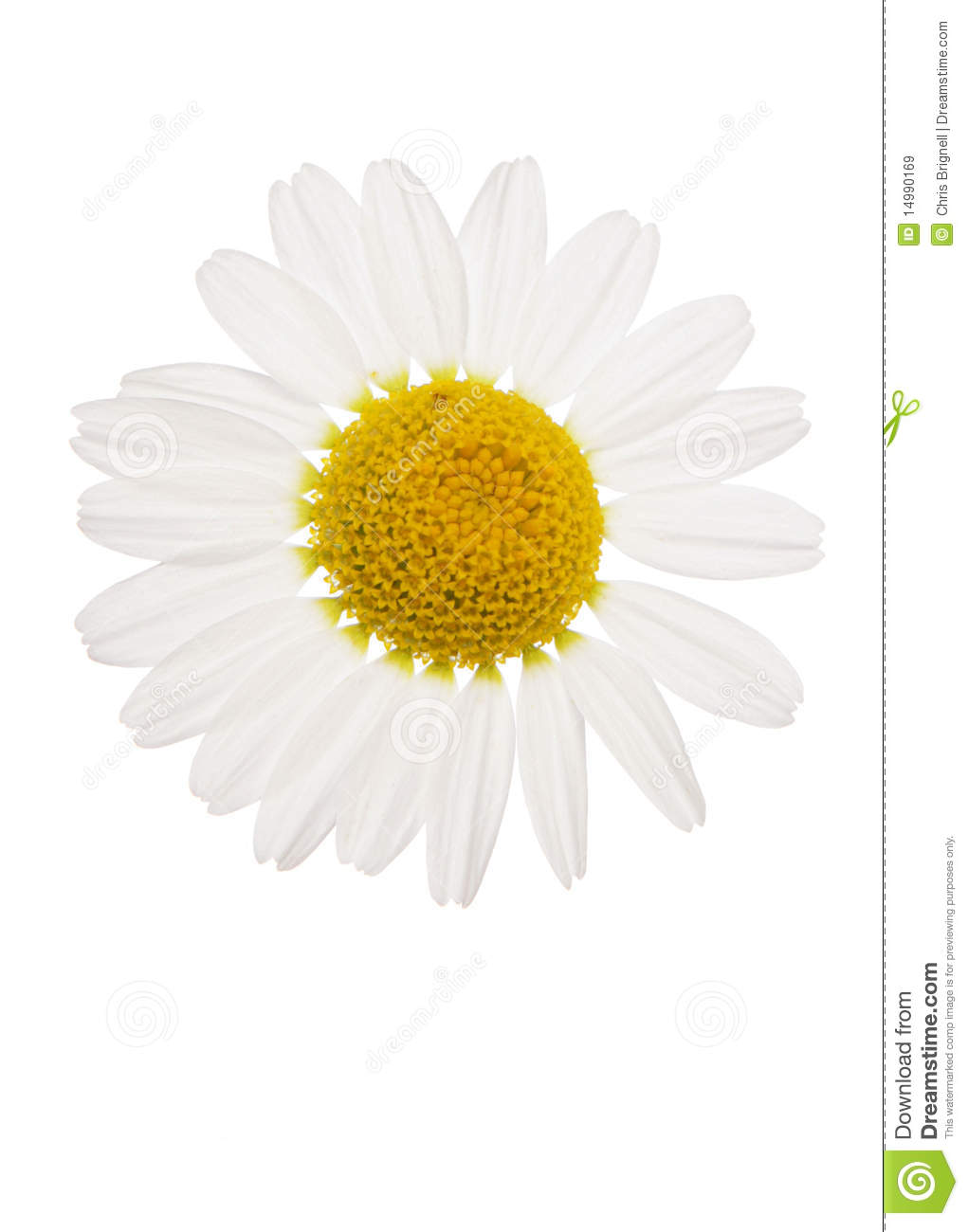Displaying 18> Images For - Daisy Flower Cut Out...