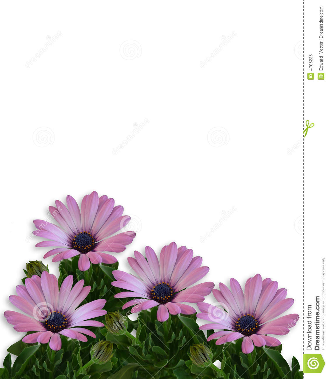 Daisy Floral Page Border Royalty Free Stock Image Image 4706236