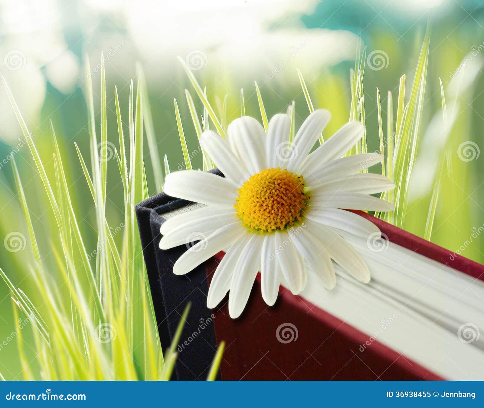 Daisy flower on book stock illustration illustration of bloom daisy flower on book izmirmasajfo