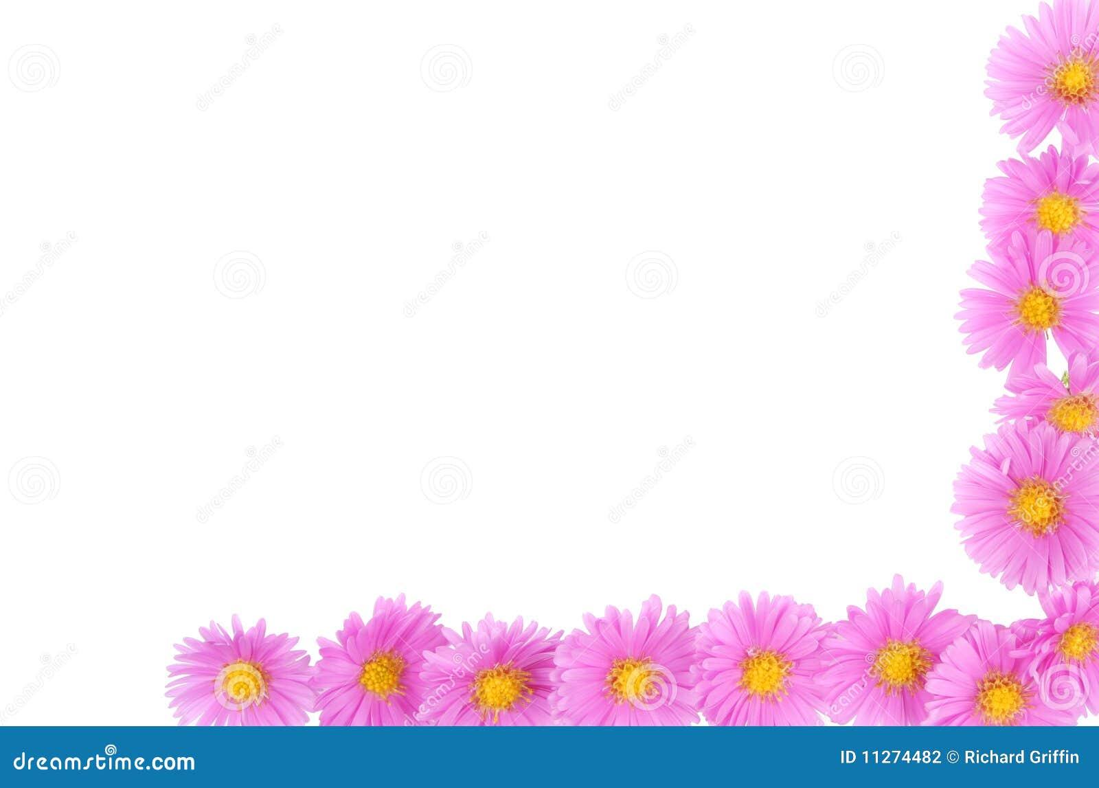Daisy flower border stock photo image of aster flower 11274482 daisy flower border izmirmasajfo