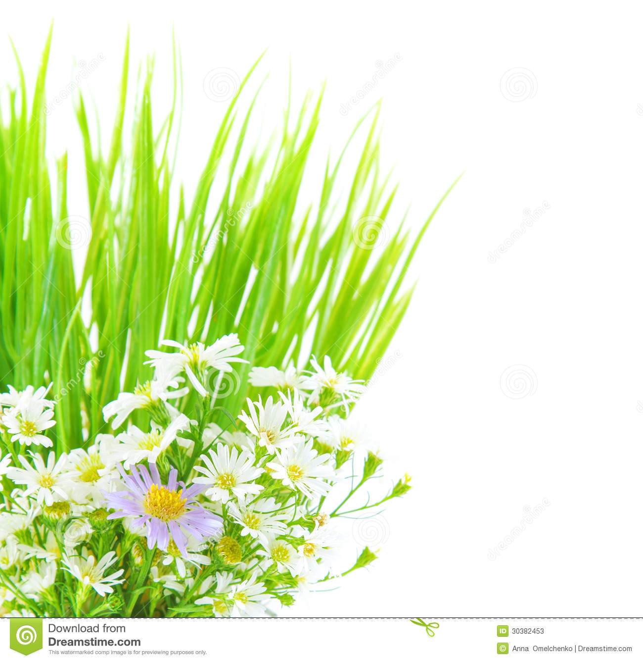 Daisy Flower Border Clip Art Free World Wide Clip Art Website