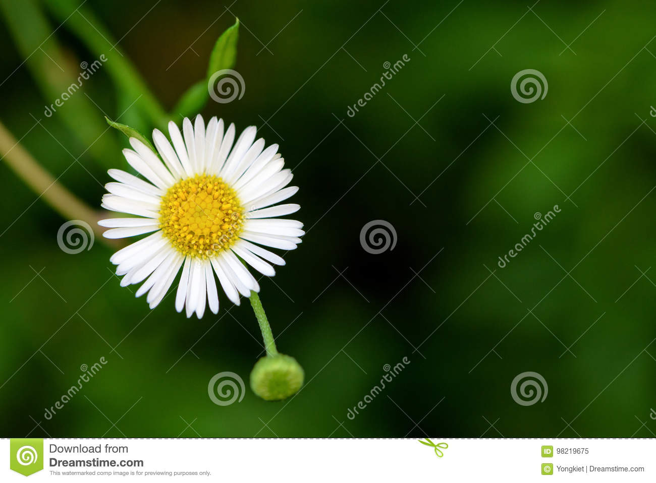 Daisy Flower On Green Background Stock Image Image Of Beautiful