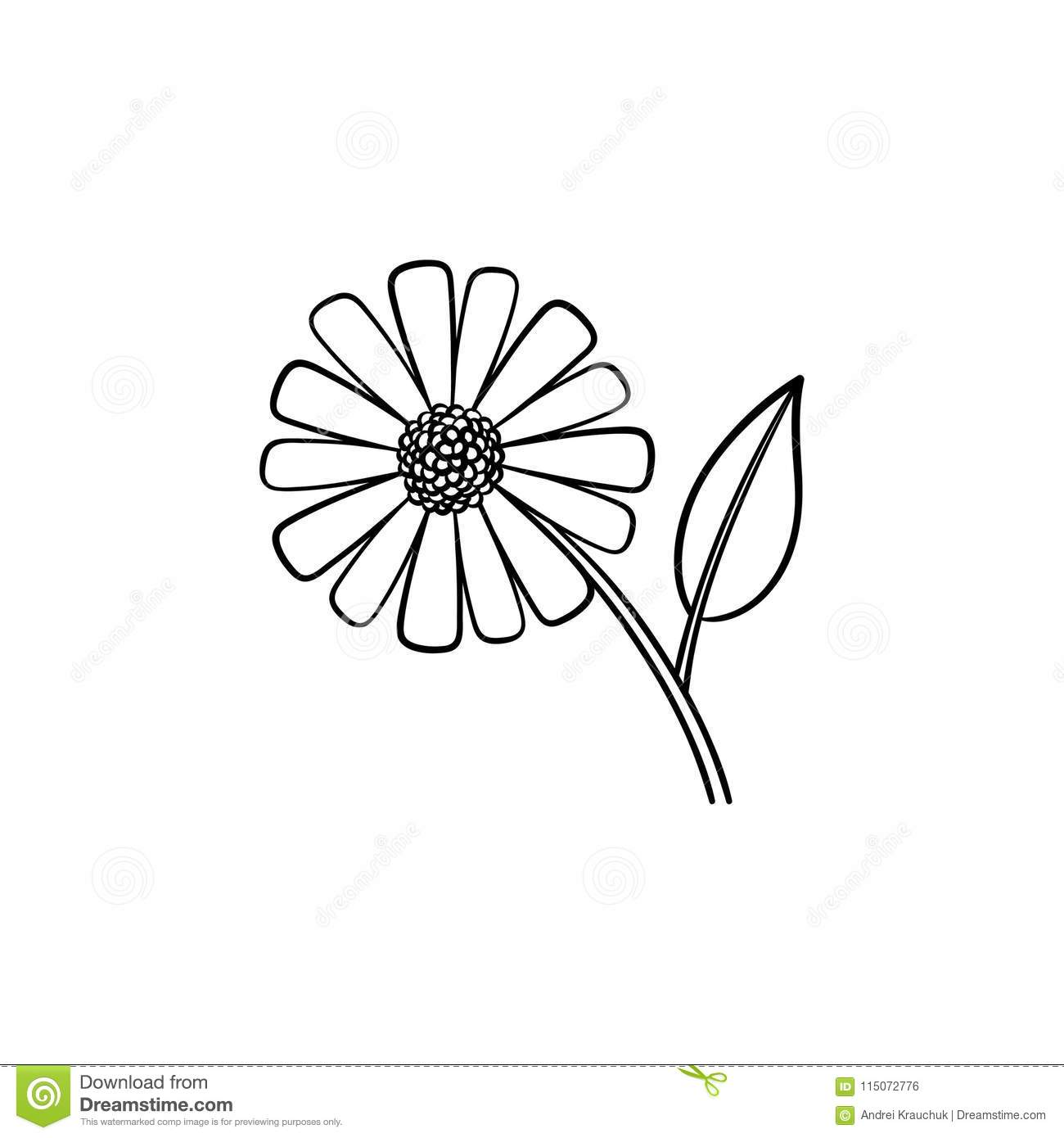 Daisy Flower Hand Drawn Sketch Icon Stock Vector Illustration Of