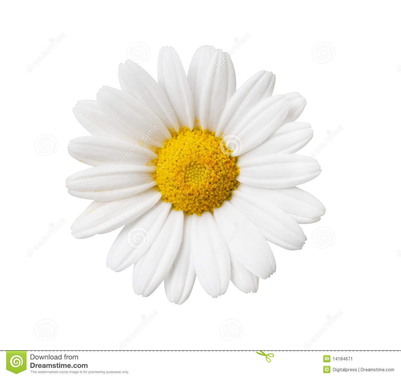 Daisy Flower Isolated With Hand Made Clipping Path Stock