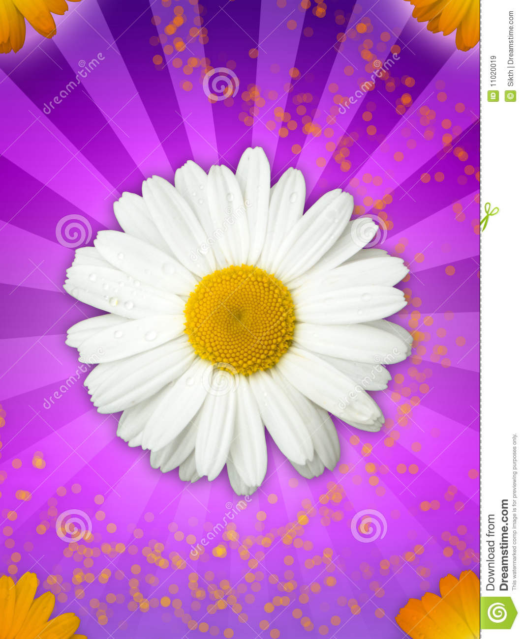 Daisy Flower on Magical Purple Background