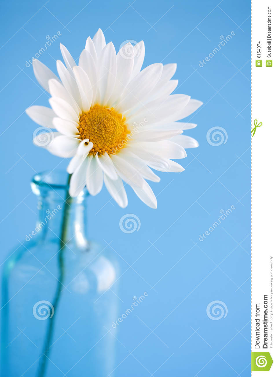 Daisy Flower in vase stock photo. Image of glass, delicate ...