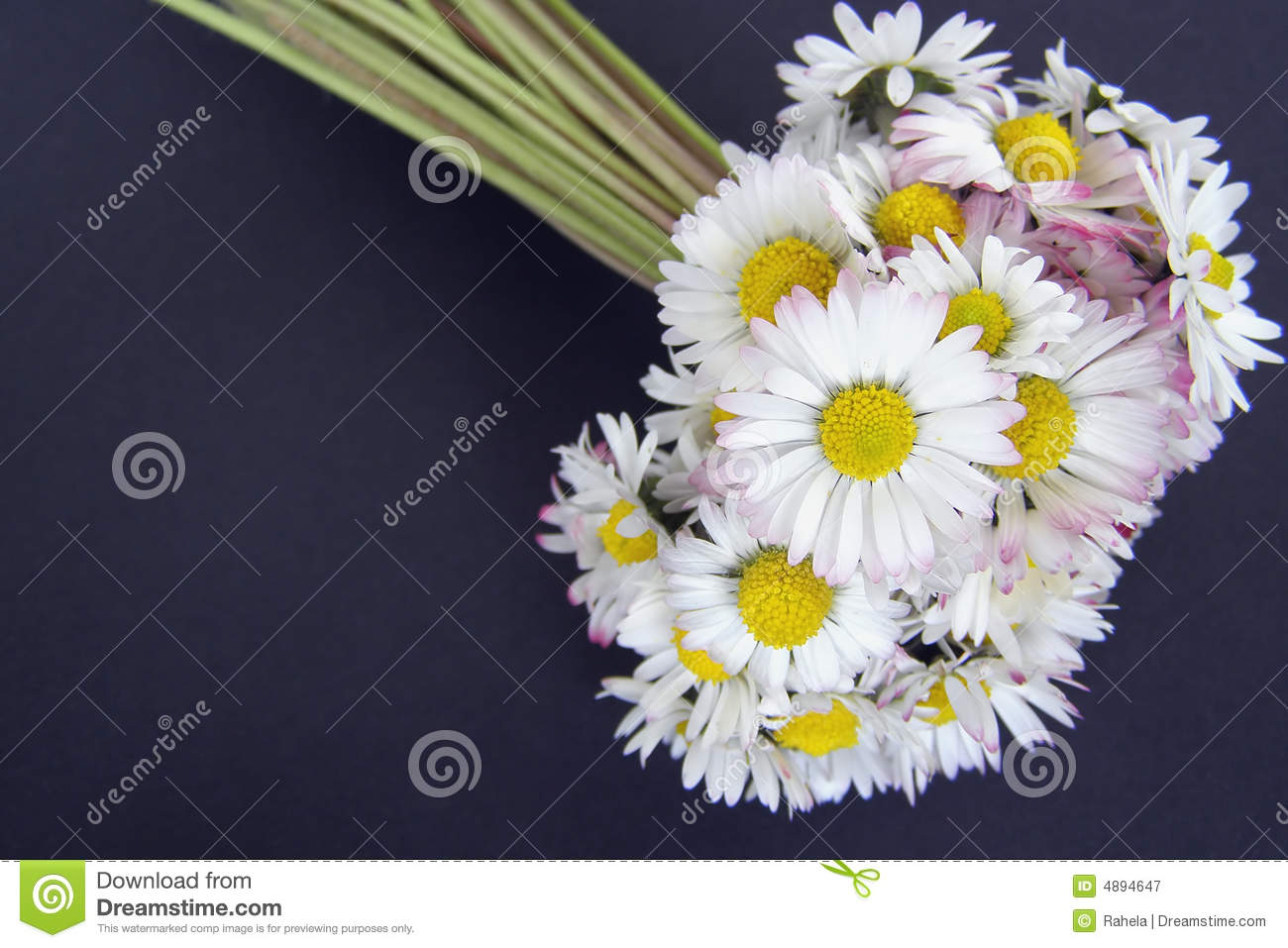 Daisy Flowers Bouquet Stock Image Image Of Natural Flora 4894647