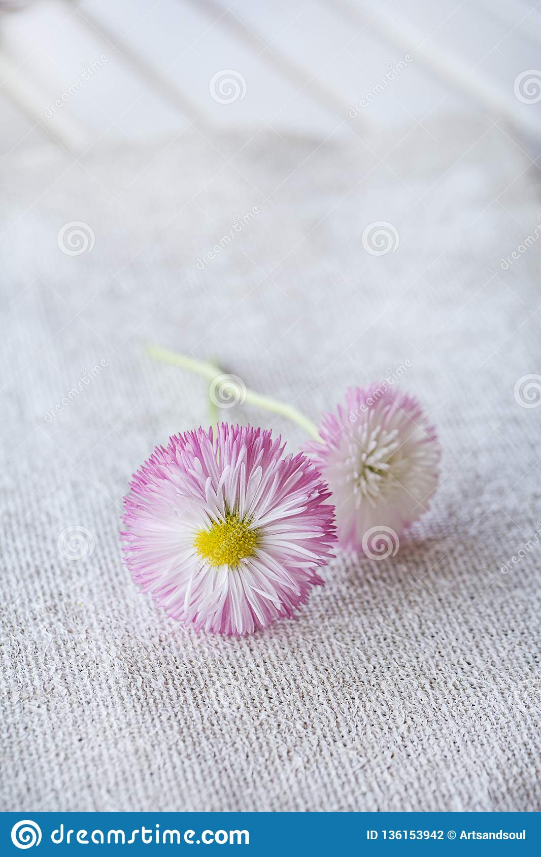 Daisy Flowers On Burlap delicata