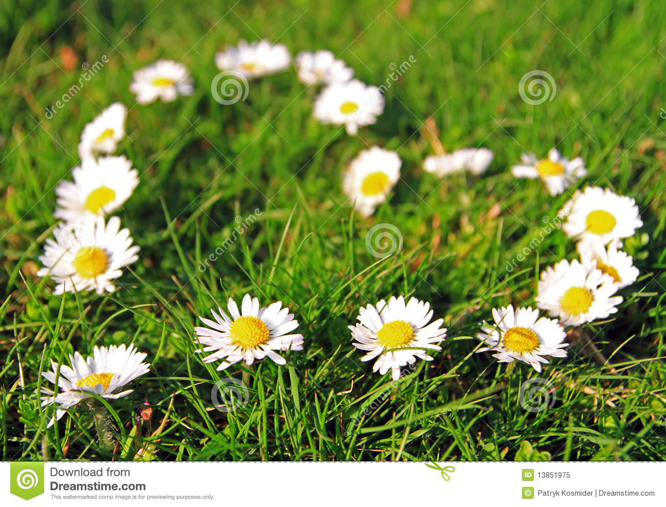 http://thumbs.dreamstime.com/z/daisy-heart-shape-13851975.jpg