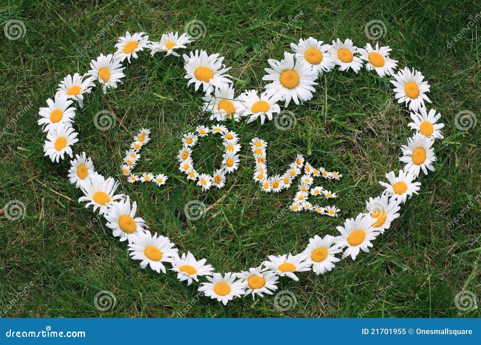 Daisy Love Heart Royalty Free Stock Photo - Image: 21701955 White Daisy Flowers Clipart