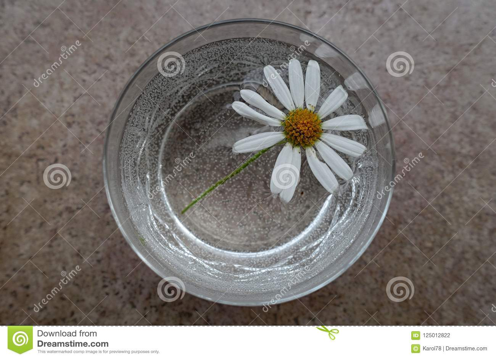 Daisy Marguerite Flower con i petali bianchi in un vetro tagliato