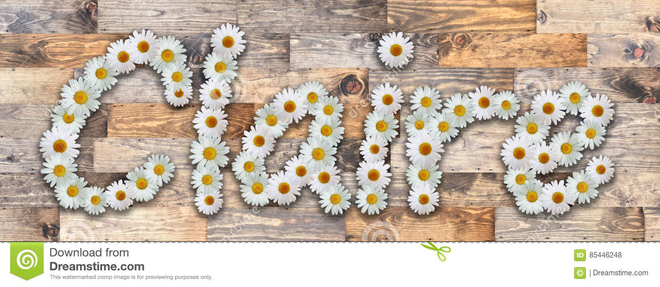 Daisy Name Claire Wood Background