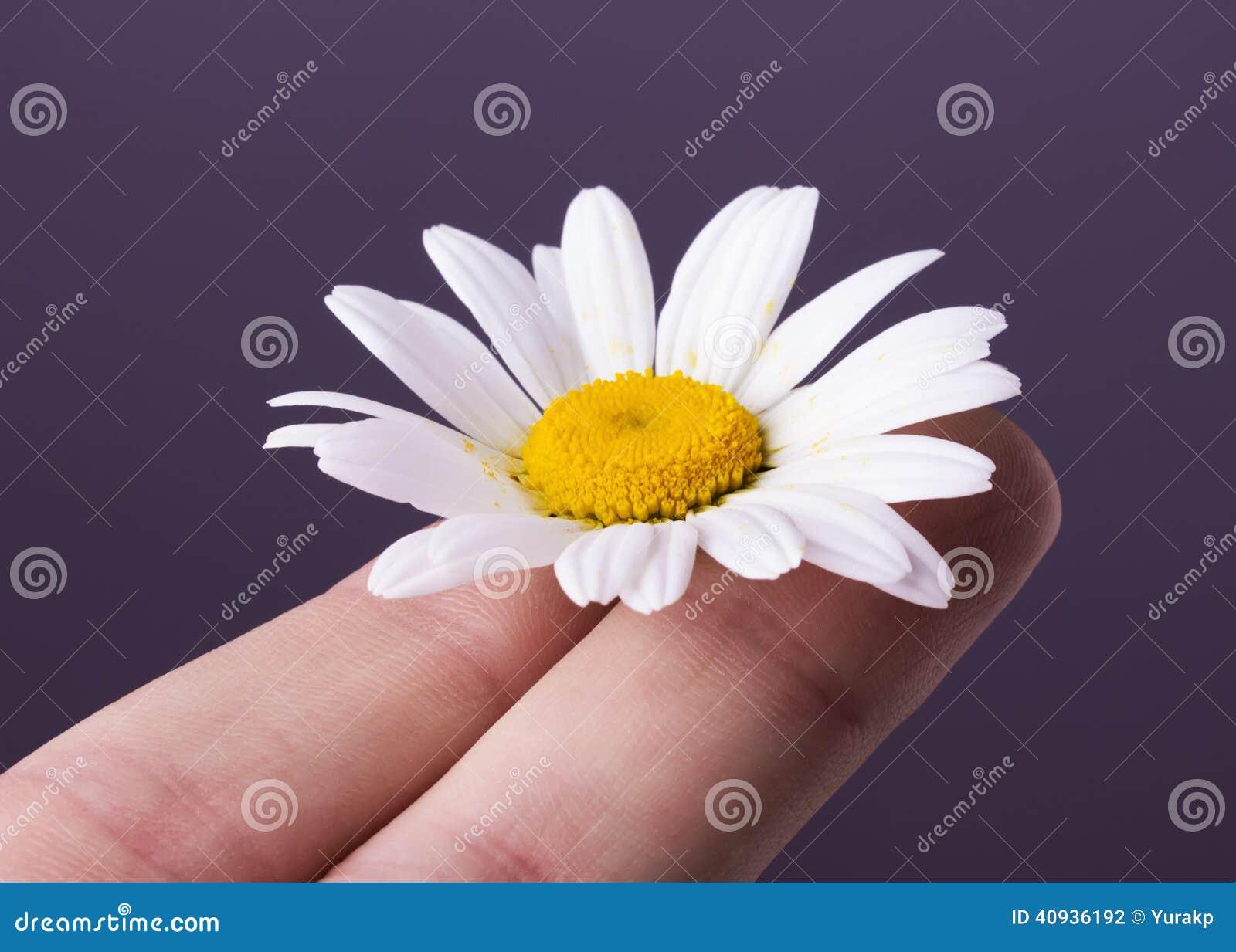 Daisy op de vingers op witte achtergrond