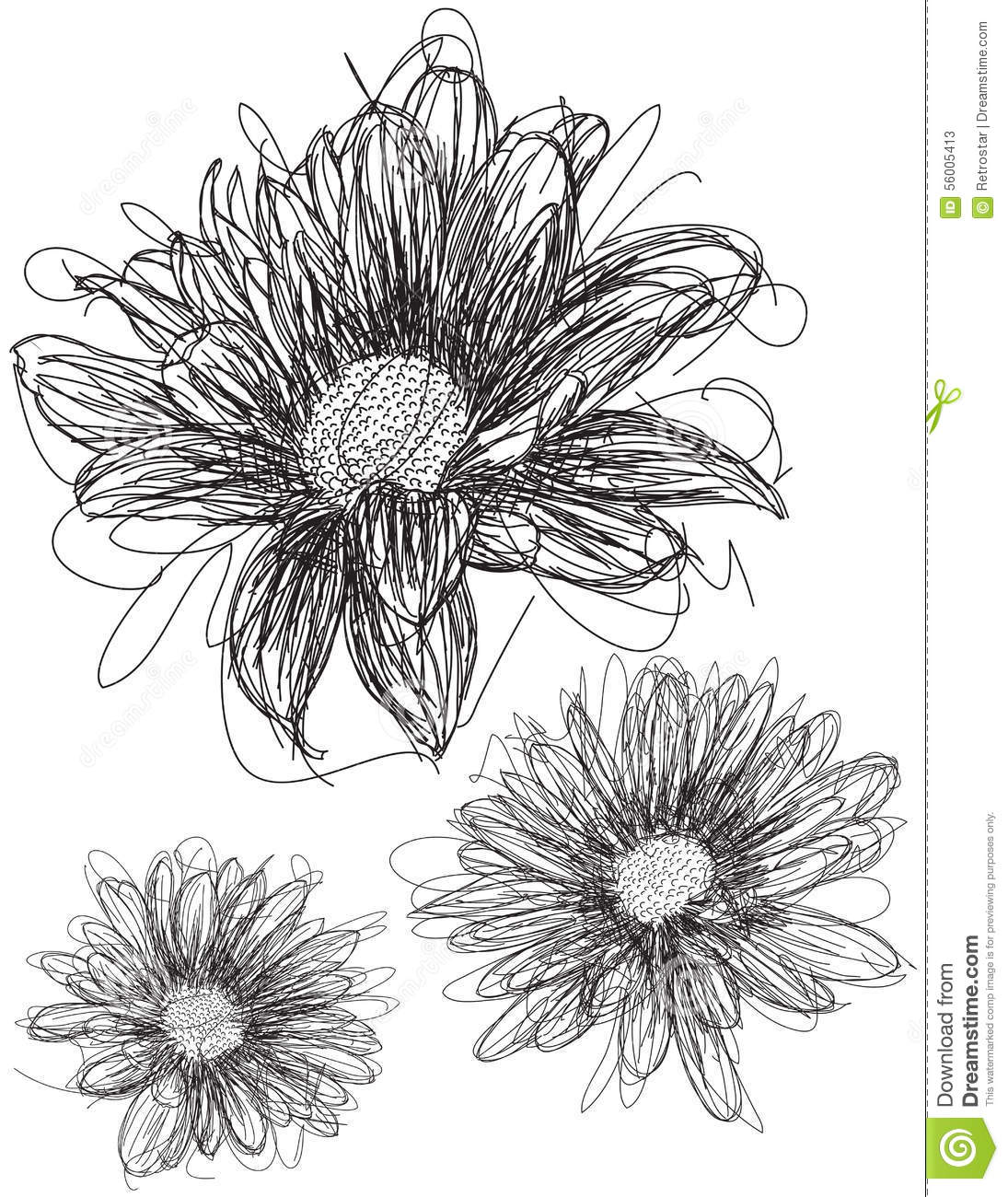 Daisy Flower Line Drawing : Daisy sketches stock vector illustration of flower