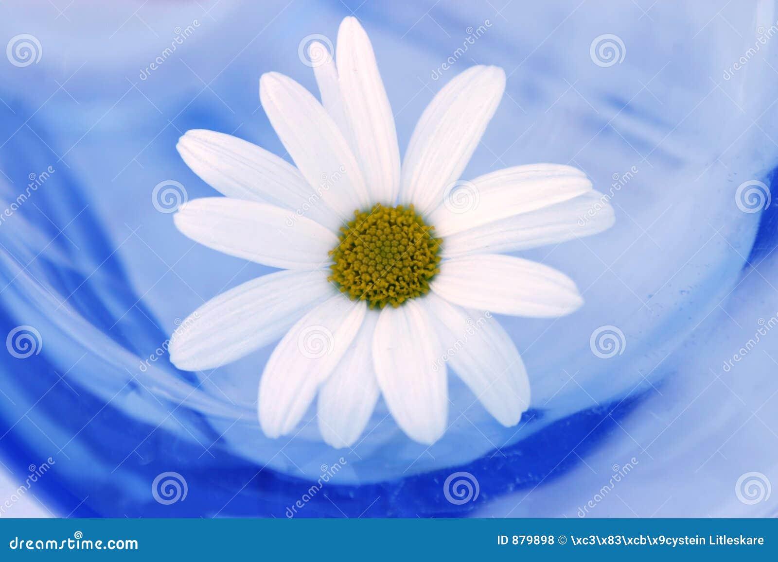 Daisy szkła
