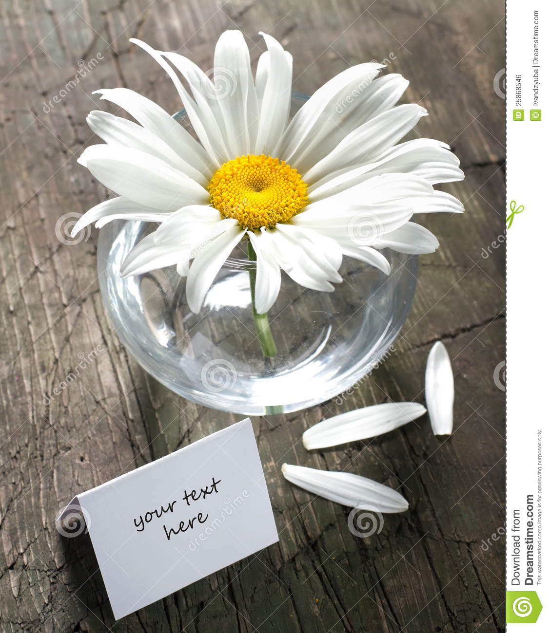 Daisy in the vase and paper card stock photo image of bouquet royalty free stock photo reviewsmspy