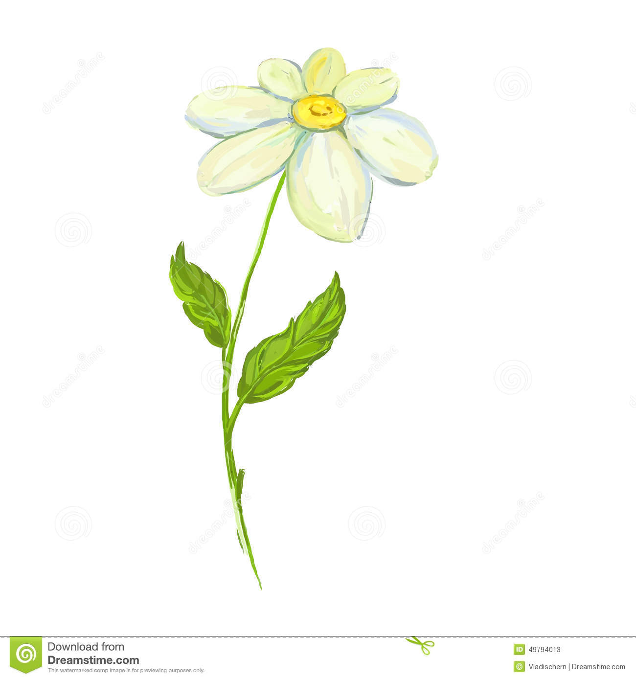 Daisy Vector Illustration Hand Drawn Painted Stock Vector - Image ...