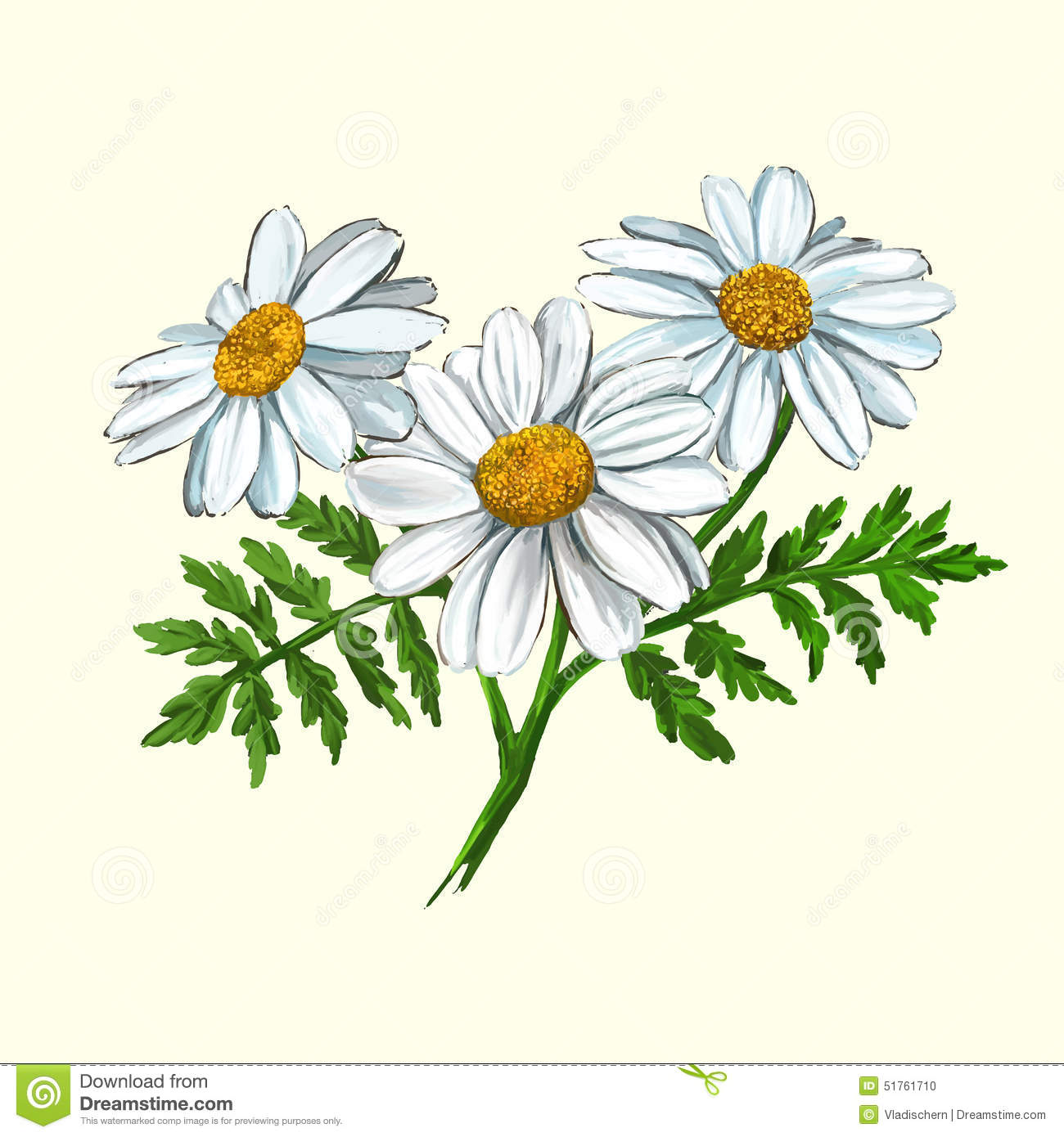 Daisy Vector Illustration Hand Drawn Painted Stock Image