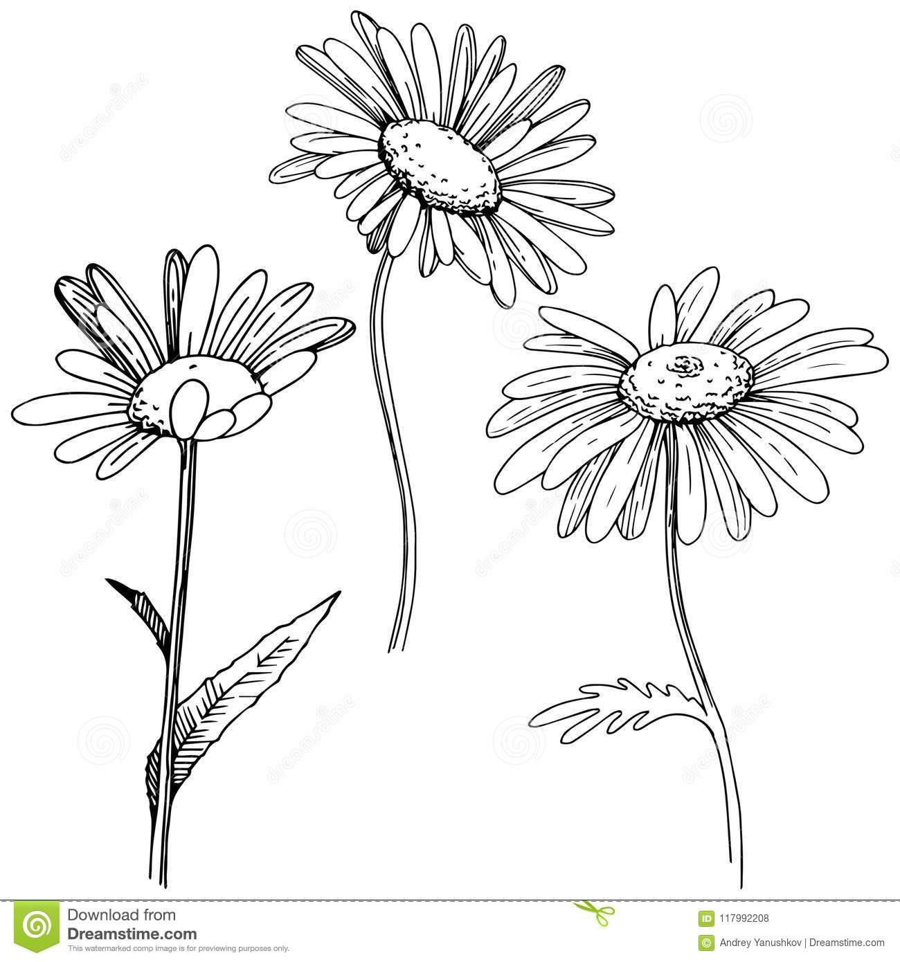 Daisy In A Vector Style Isolated Stock Vector Illustration Of