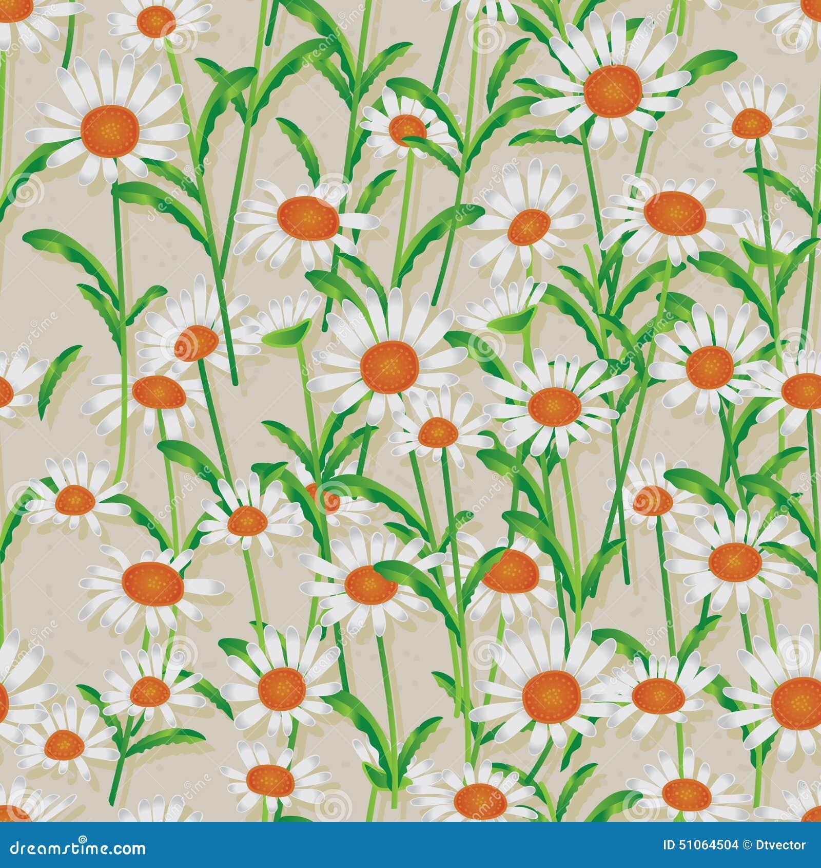 Daisy wit naadloos patroon