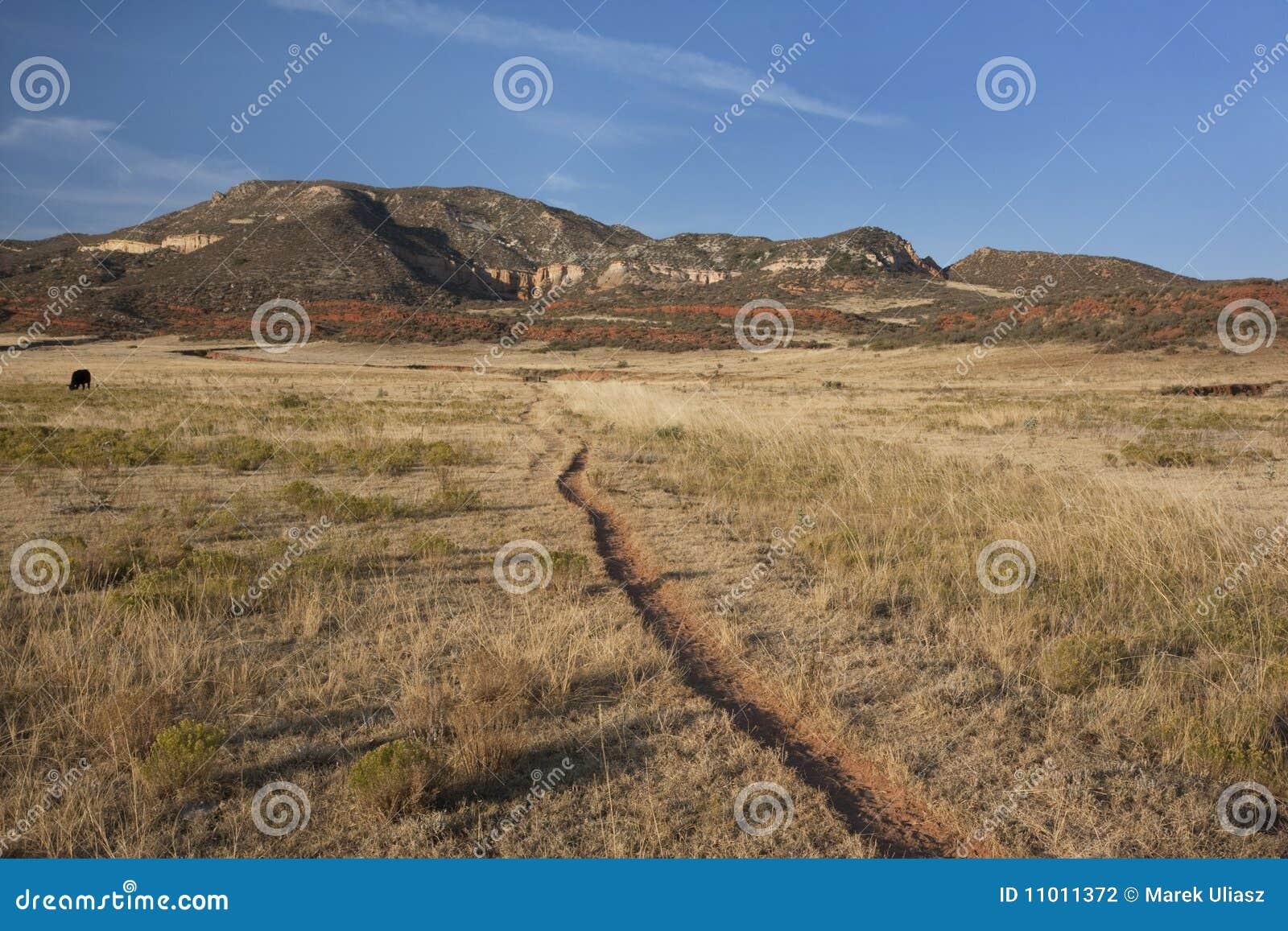 Dal för trail för nötkreaturcolorado berg