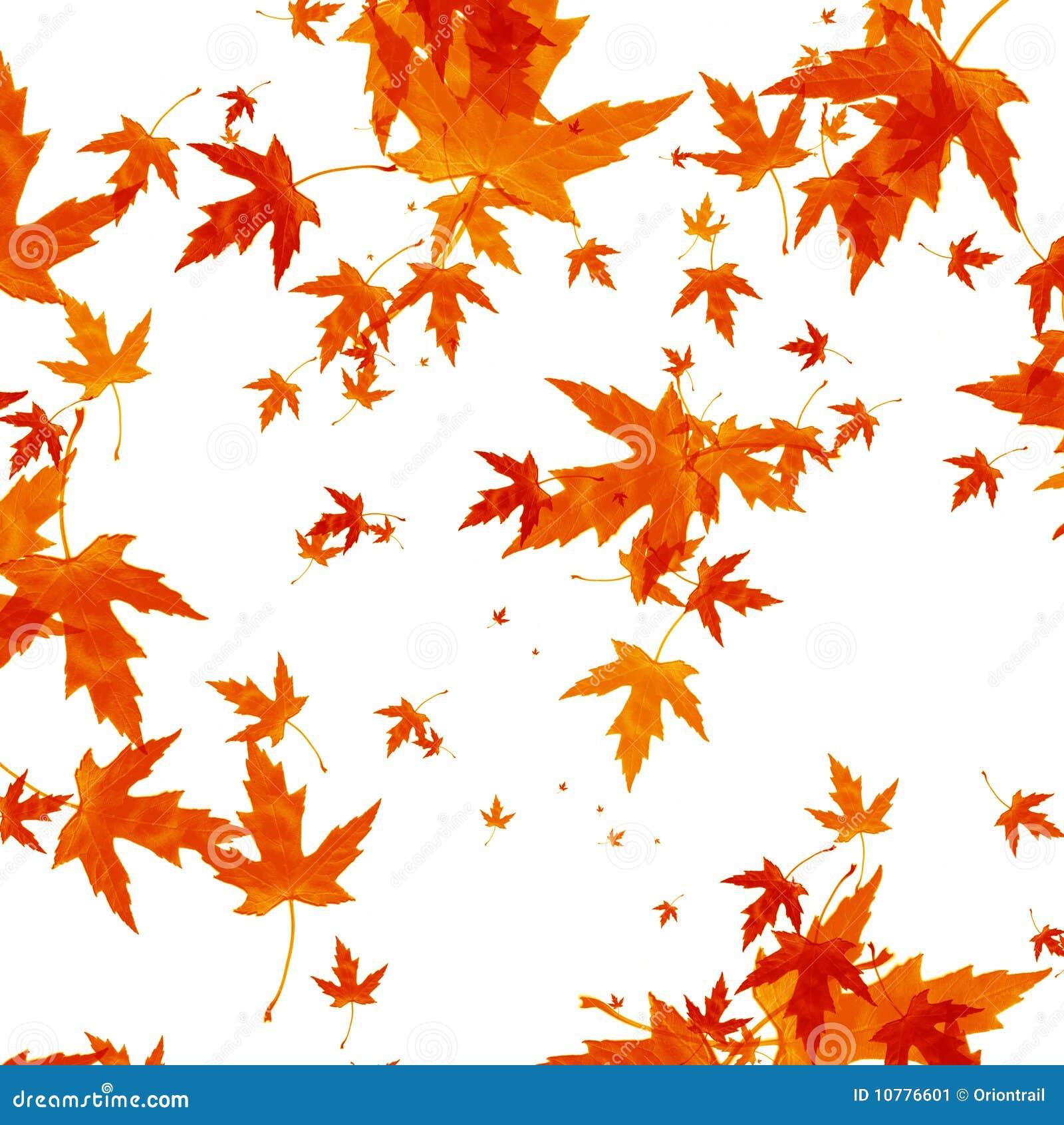 Dalende de herfstbladeren op witte achtergrond