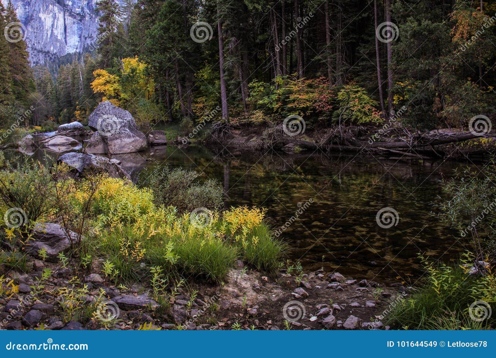Daling op een stille stroom, het Nationale Park van Yosemite, Californië, de V.S.