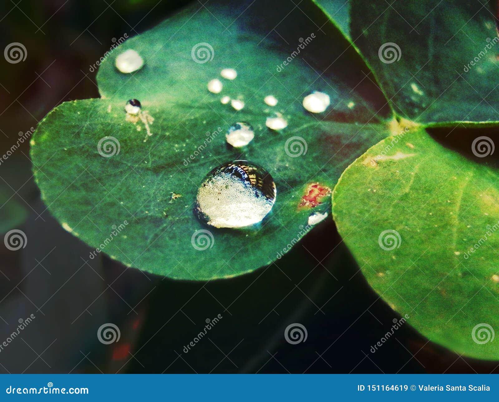 Dalingen van water over een blad