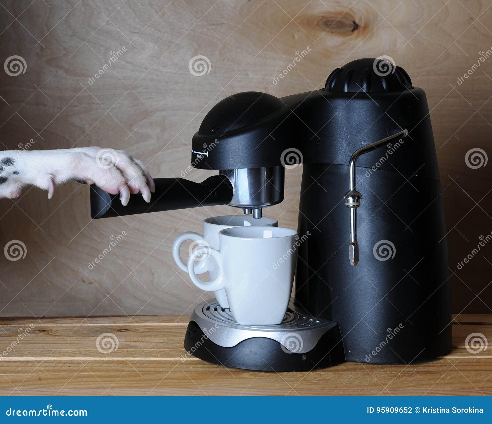 Dalmatian barista prepares coffee. Dog& x27;s paw on the handle of the espresso machine.