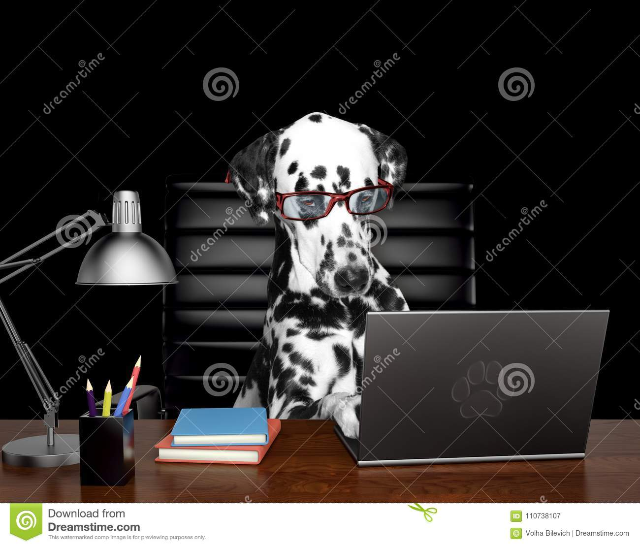 Dalmatian dog in glasses is doing some work on the computer. Isolated on black