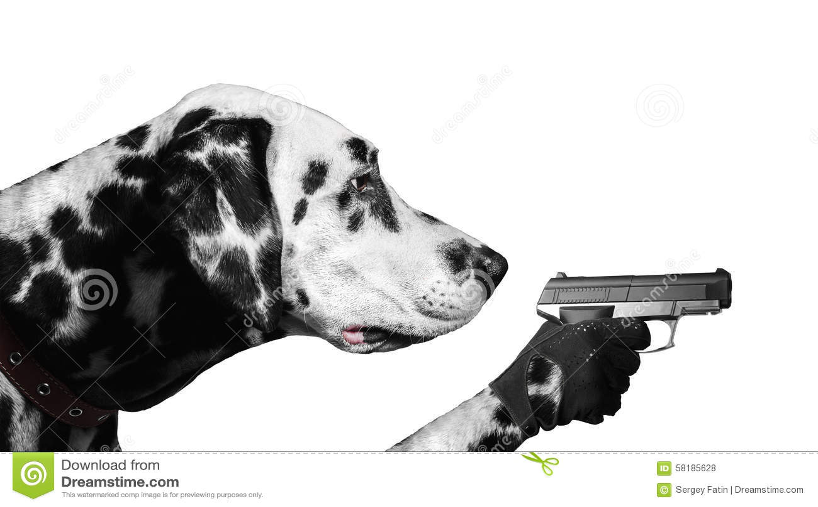 Dalmatian Dog With Guns Stock Photo - Image: 58185628