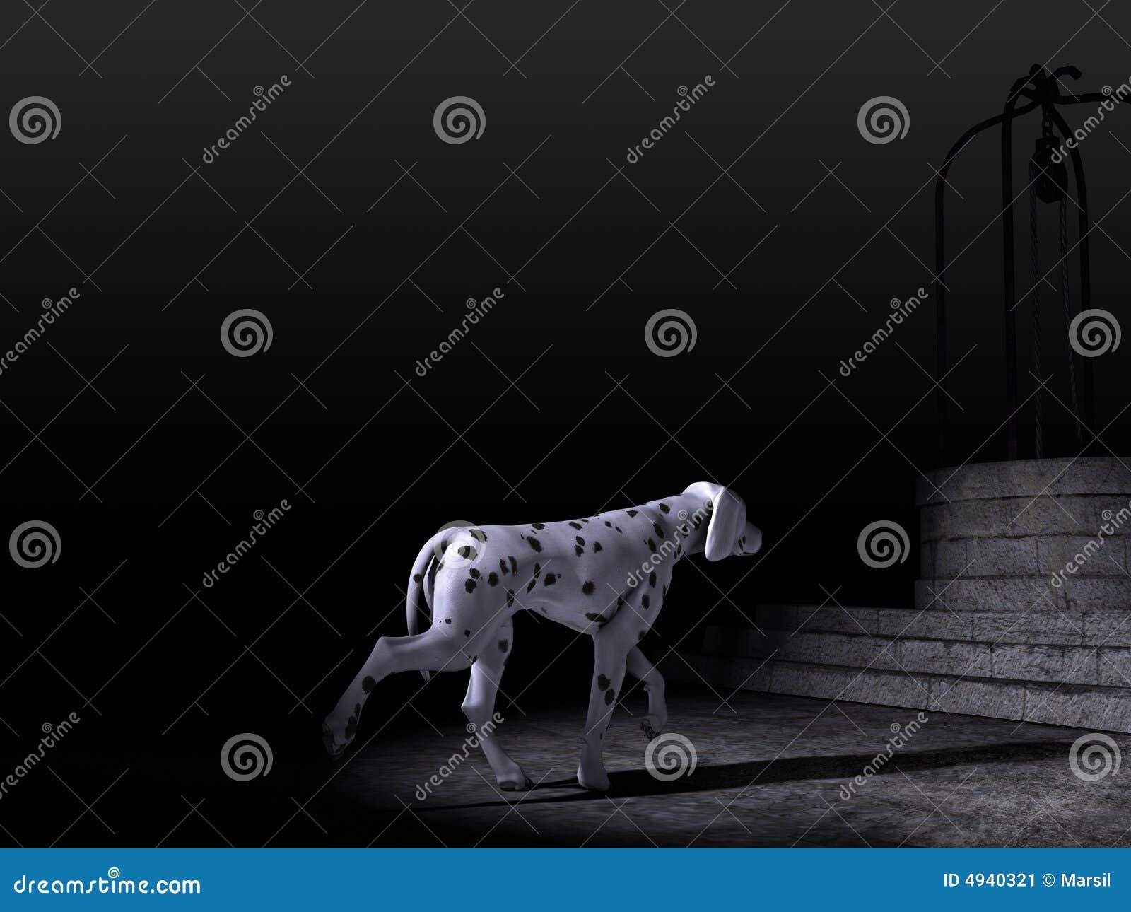 Dalmatian Dog in the night