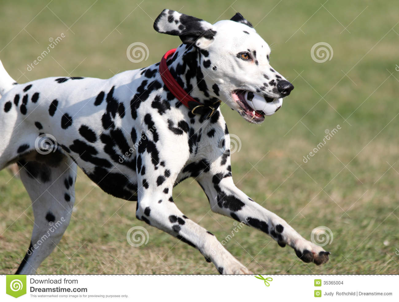 Pictures Of Black Spotted Dogs