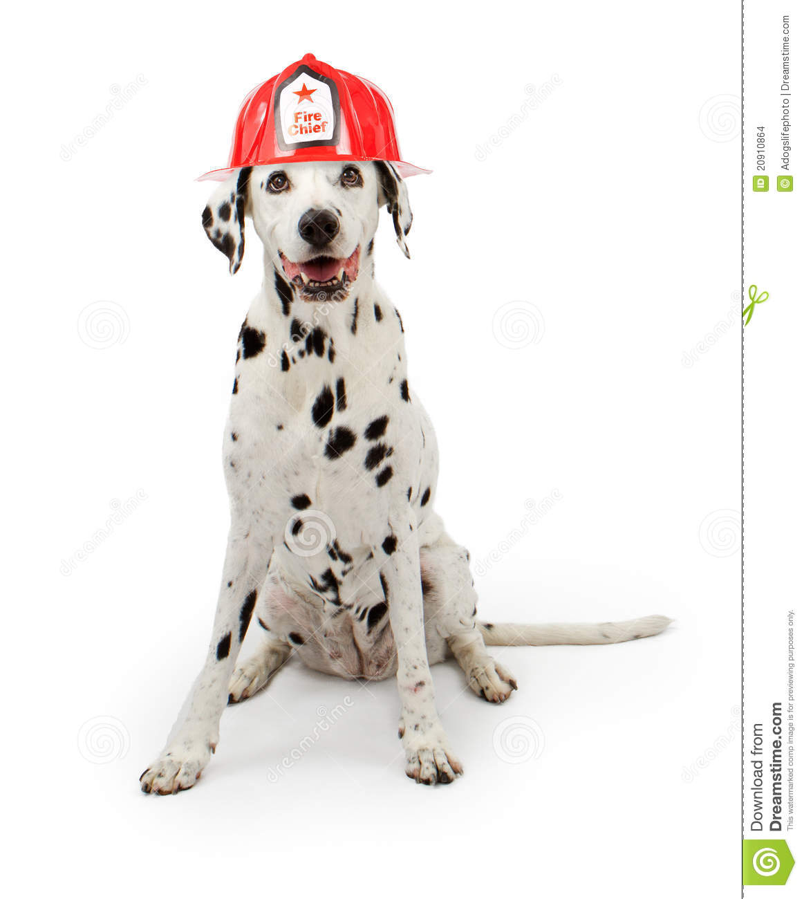 Dalmation Dog Wearing A Red Fireman Hat Stock Images - Image: 20910864