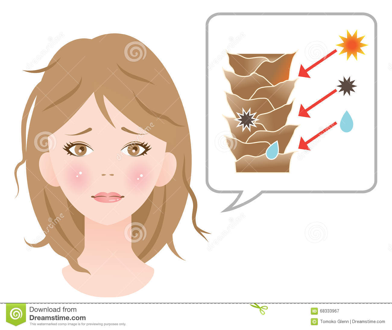 Damaged Cuticle Layer Cause Damaged Hair Stock Vector