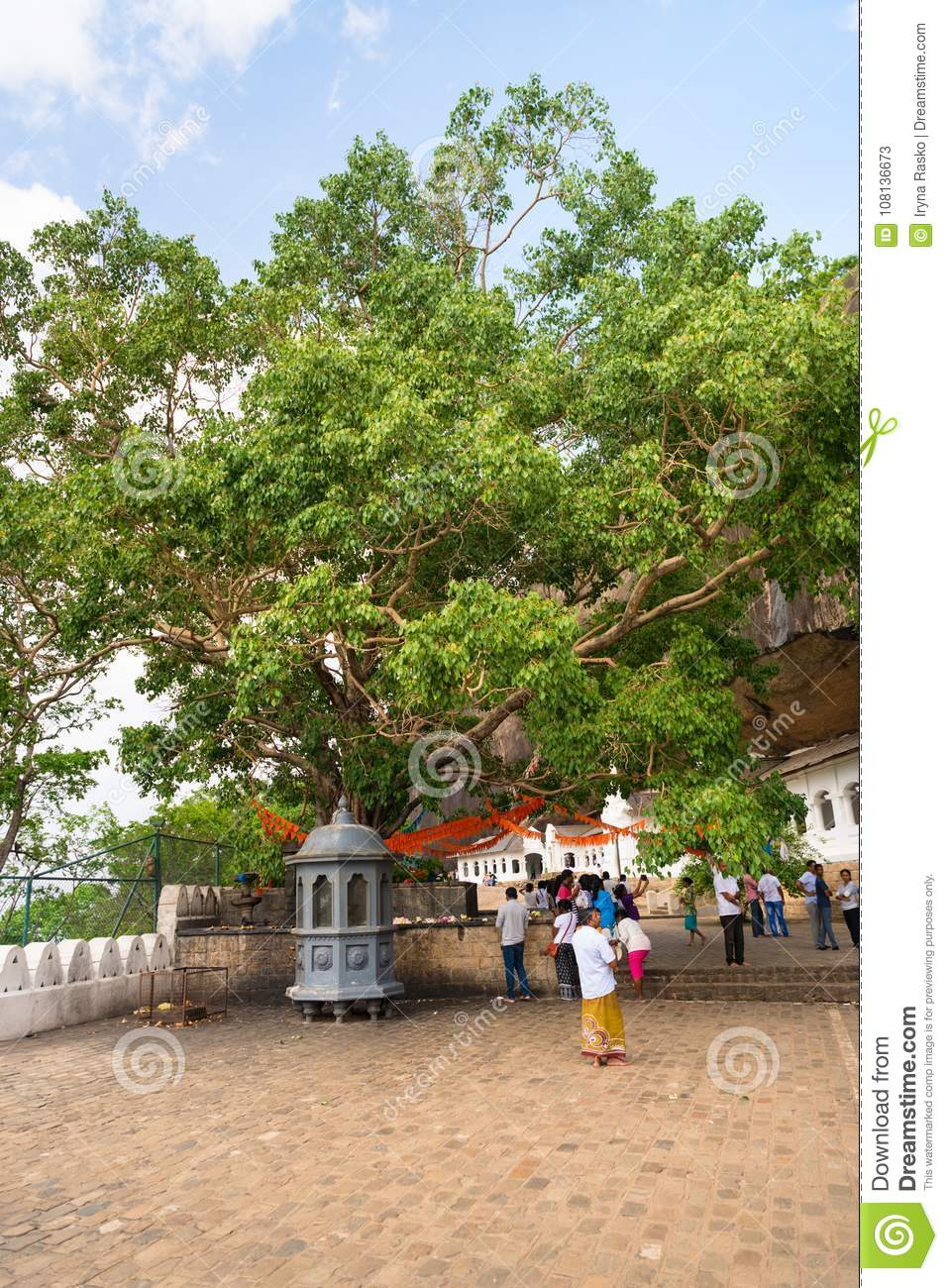 Holy bodhi ficus tree in the Dambulla Golden temple cave complex
