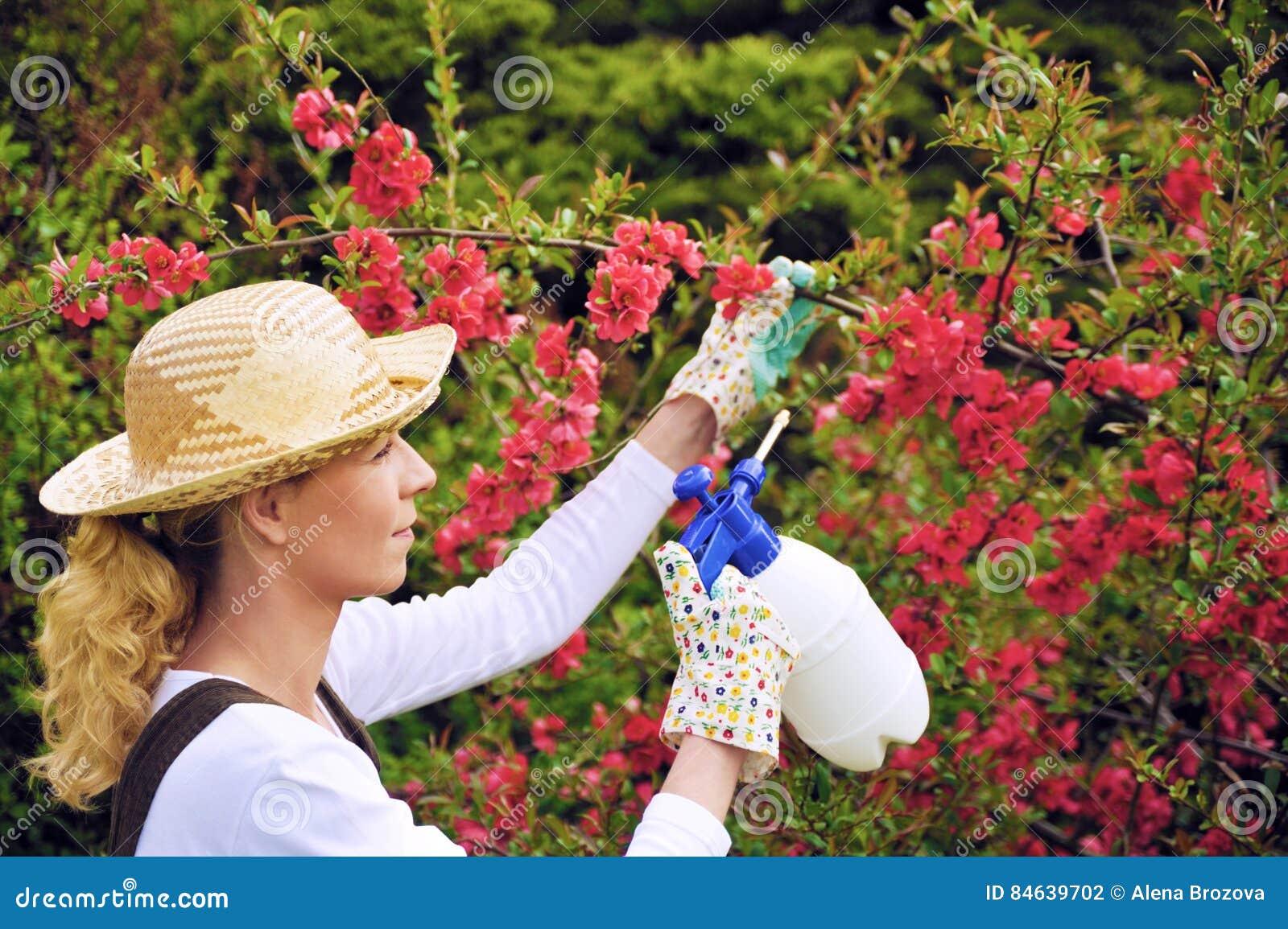 Dame die in boomgaard werken