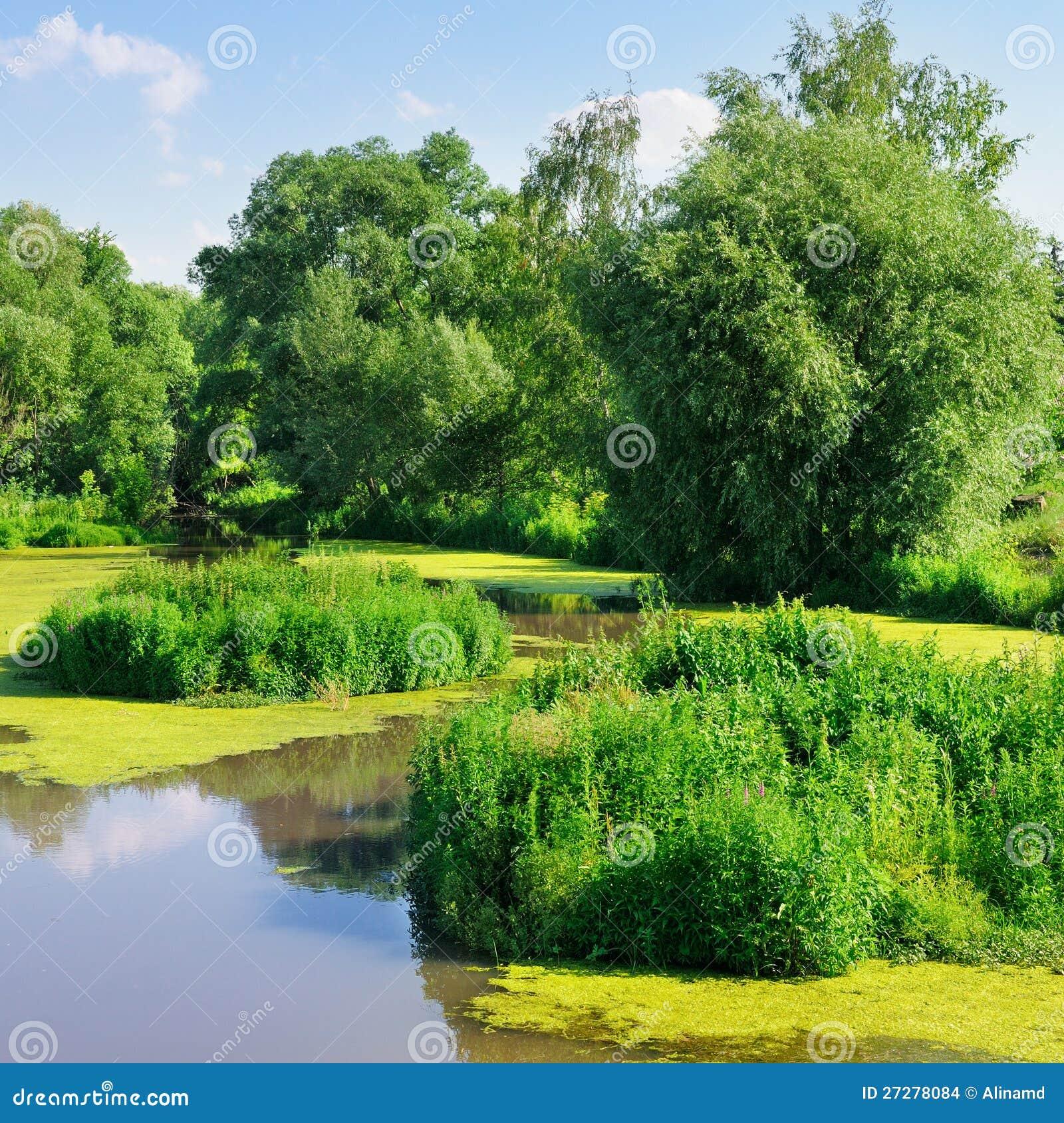Damm med vattenväxter