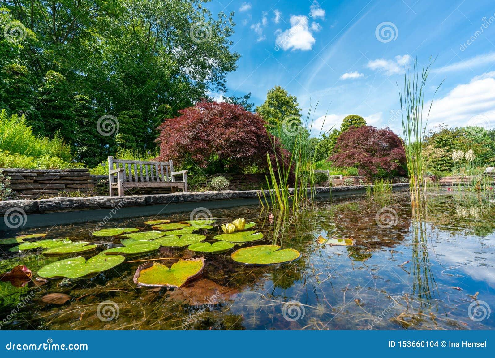 Dammet för den formella trädgården med näckrors och parkerar bänken
