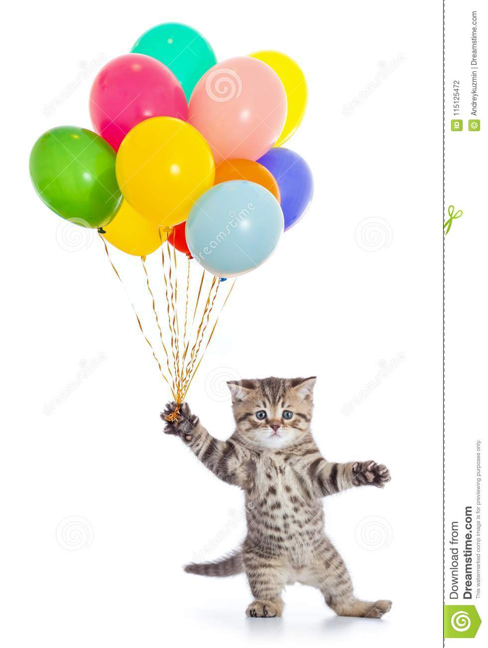 dancing cat with birthday party balloons isolated stock
